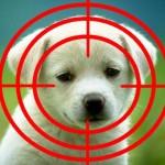 Puppy Crosshairs